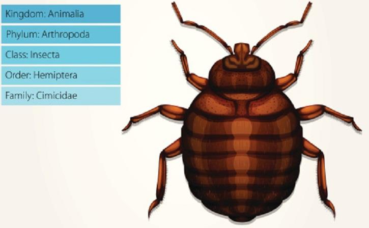 How do I Know If I Have Bed Bugs?